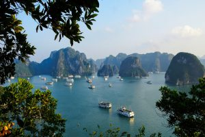 A variety of cruises in Halong Bay
